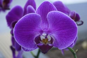 Orquídeas: Como Cuidar